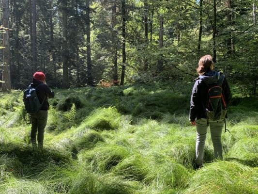 """Gemeinsam im Wald"" gegen den Corona-Blues"